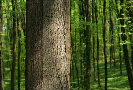 Met maatschappelijk verantwoord ondernemen is er ook aandacht voor het milieu